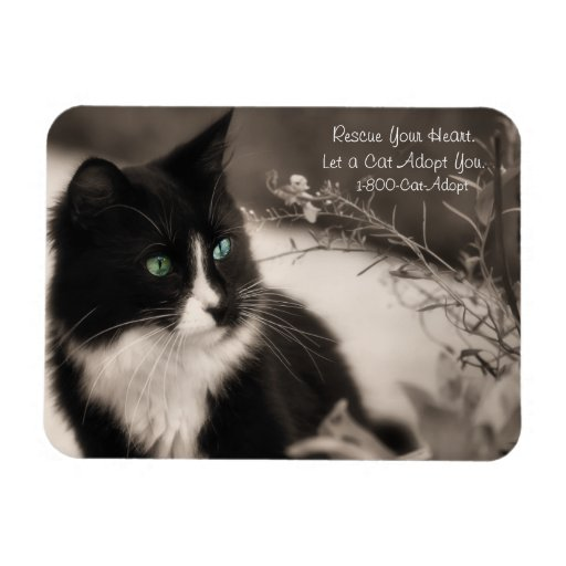 Pet Adoption Rescue Your Heart And Adopt A Cat Flexible Magnet