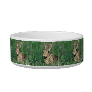 pet bowl medium