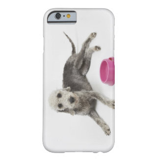 Pet care, health and nutrition for domestic pets barely there iPhone 6 case
