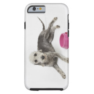 Pet care, health and nutrition for domestic pets tough iPhone 6 case