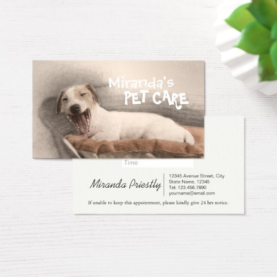 Pet Care Sitting Bathing and Grooming Beauty Salon