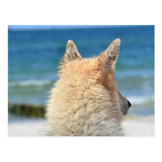 Pet Dog  At The Beach   Sea Sand Surf Postcard