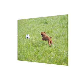 Pet dog running after football in park canvas print