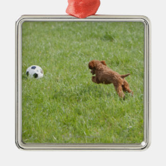 Pet dog running after football in park Silver-Colored square decoration