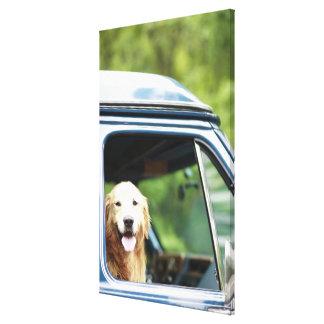 Pet dog sitting in a car canvas print