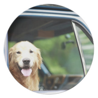 Pet dog sitting in a car plate