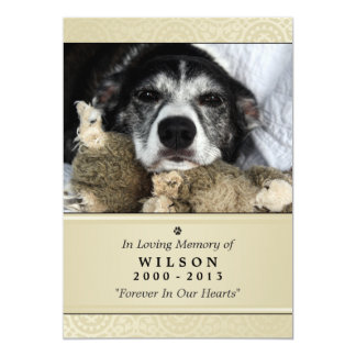 "Pet Memorial Card 5""x7"" Creme Modern - Male Pet 13 Cm X 18 Cm Invitation Card"
