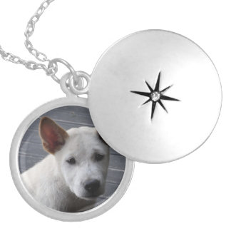 Pet Memorial Locket - Silver Plated