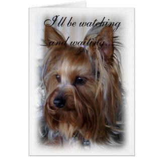 Pet Memorial Sympathy Card