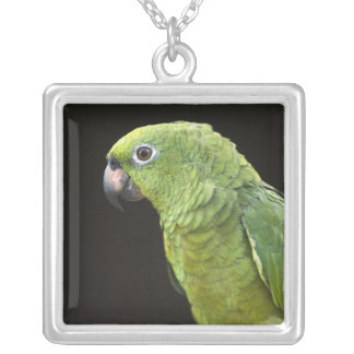 Pet parrot Macushi people Yupukari village Silver Plated Necklace