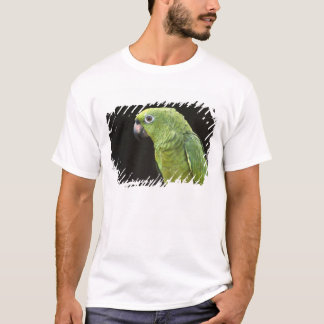 Pet parrot Macushi people Yupukari village T-Shirt