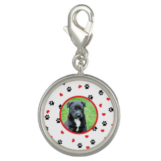 pet photo with paws and hearts pattern