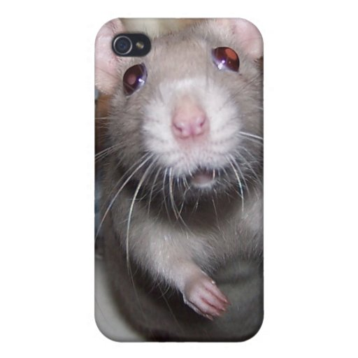 Pet Rat Baby Izzy iPhone Case Cover For iPhone 4