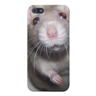 Pet Rat Baby Izzy iPhone Case iPhone 5 Covers
