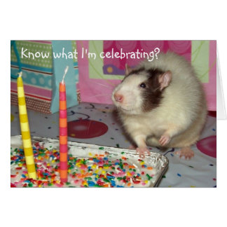 Pet Rat Ollie Birthday Card