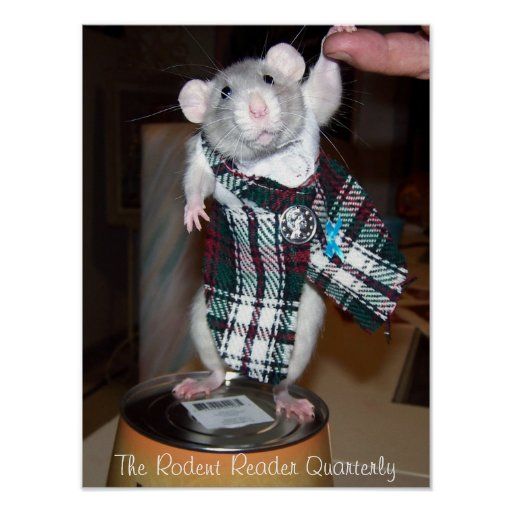Pet Rat Ruby Poster - Kilt