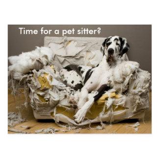 Pet Sitter Great Dane on Chewed Sofa Postcard