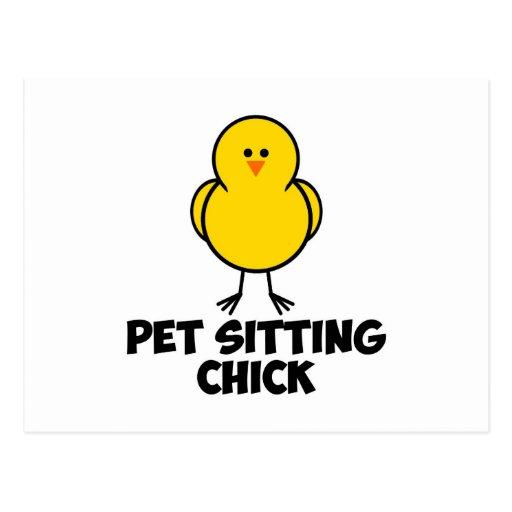Pet Sitting Chick Postcard