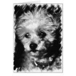 Pet Sympathy - Greeting Card