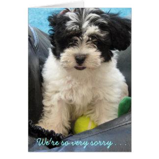 Pet Sympathy - Havanese puppy . . Card