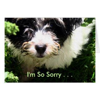 Pet Sympathy - Havanese Puppy. Card
