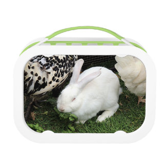 Pet white rabbit lunchboxes