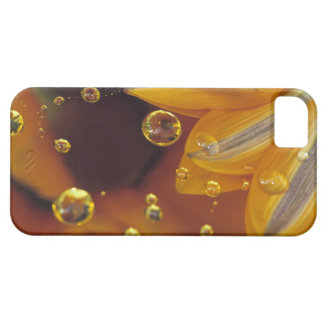 Petals on Mylar reflective surface with drops. iPhone 5 Case