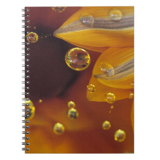 Petals on Mylar reflective surface with drops. Notebook