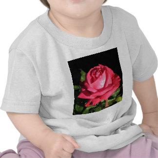 Peter Frankenfeld Hybrid Tea Rose 001 T-shirts