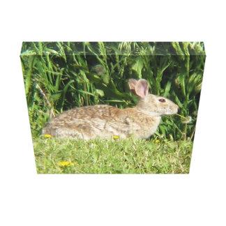 Peter Rabbit Canvas Prints