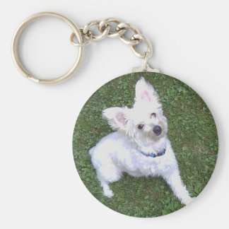 Petey the Pom-A-Poo ~ Nothing gets him down Key Chain