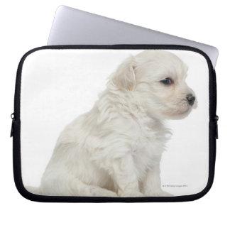 Petit chien lion or Little Lion Dog puppy Laptop Sleeve