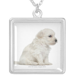 Petit chien lion or Little Lion Dog puppy Silver Plated Necklace