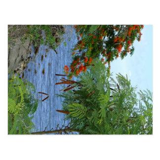 Petite Anse - Martinique, FWI Postcard
