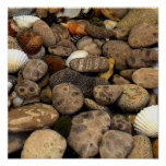 Petoskey Stones with Shells l Print