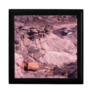 petrified forest gift box