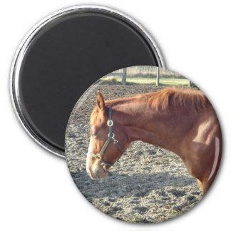 Petty Chestnut Horse 6 Cm Round Magnet
