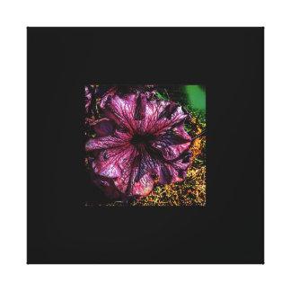 Petunia Edit Stretched Canvas Prints