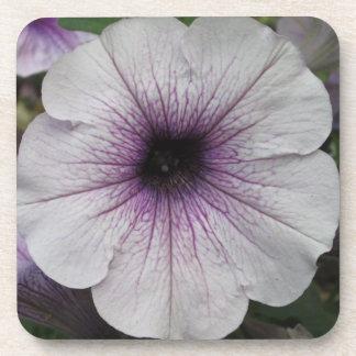 Petunia Purple Close Beverage Coasters