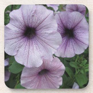 Petunia Purple White Beverage Coaster