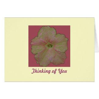 Petunia Sketch Card