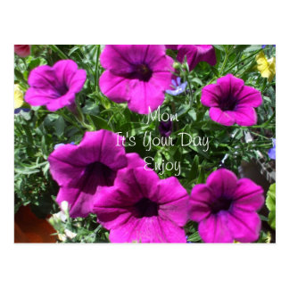 Petunias for Mom s Special Day Postcard