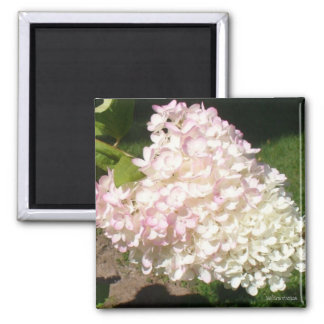 PG Hydrangea Magnet 2 Inch Square Magnet