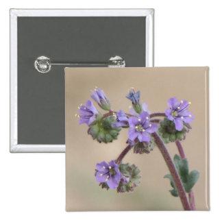 Phacelia Purple Wildflowers 15 Cm Square Badge