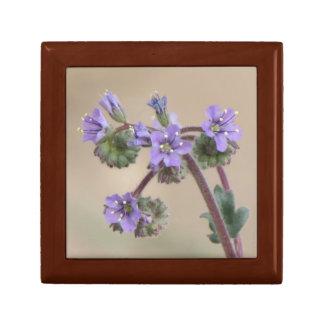 Phacelia Purple Wildflowers Gift Box