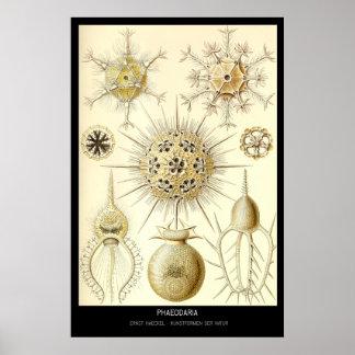 Phaeodaria – Plate 1-Kunstformen der Natur Poster