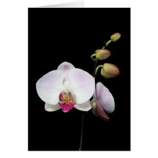 """Phalaenopsis"" Card"