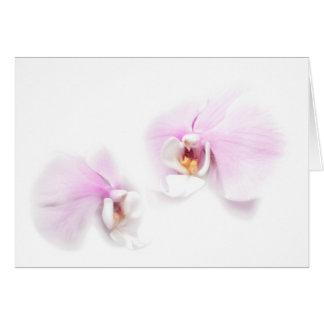 Phalaenopsis Hilo Lip Flower Duo Card