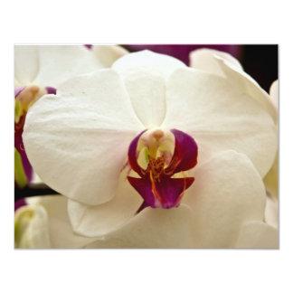 Phalaenopsis Orchid 11 Cm X 14 Cm Invitation Card