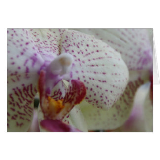 Phalaenopsis Orchid Card